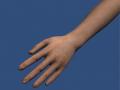 New arm models in progress