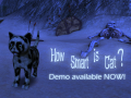 How Smart is Cat? Demo available!