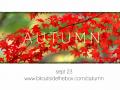 Autumn - first gameplay demo video