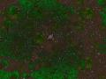 Violent Sol Worlds Tree Details