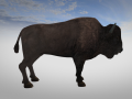 On the Hunt - Herds, buffalos, sounds, ...