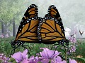 Butterfly Mating, Reproduction & Migration Announced!