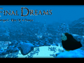 Final Dreams - Rise Of A Pengu (First Minutes)