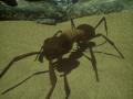 Ant-Simulator (UE4) Demonstration Build