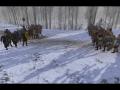Vikingr Community Release - Full Version