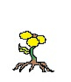 flower sprout