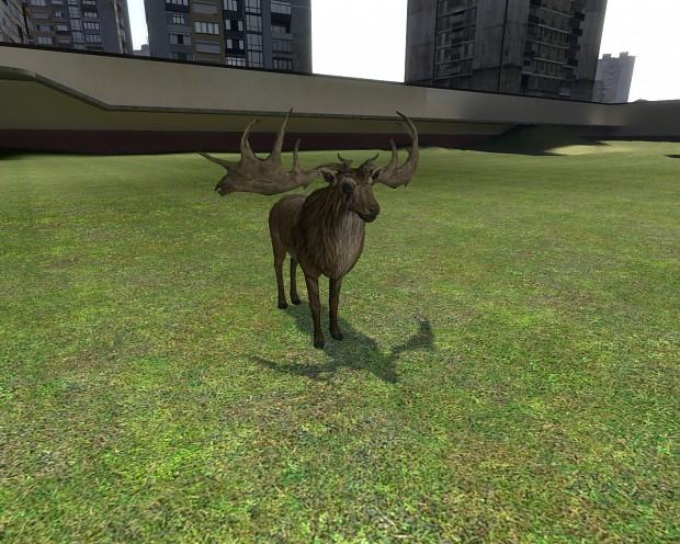 Deer Snpc
