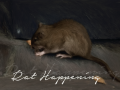 Rat Happening (Windows)