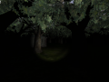 The Horror Forest