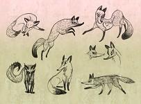 Tri Fox
