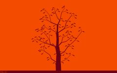Birch like tree