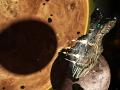 Wayward Terran Frontier