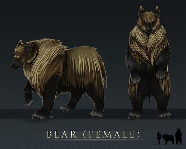 Female Bear