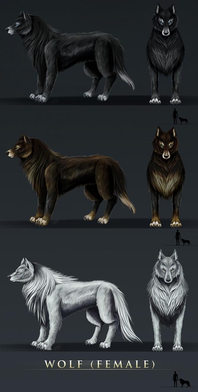 Wolf Females