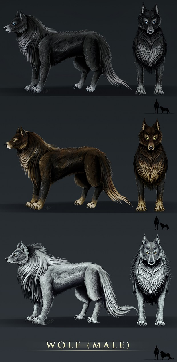 Wolf Males