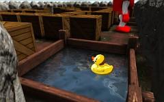 Duck in trouble