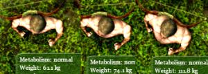 Get fat..