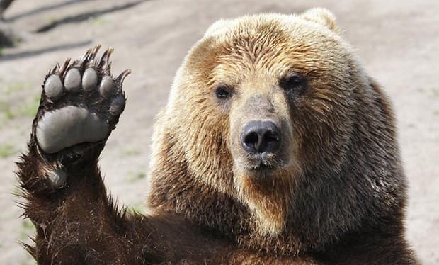 Bear high-five!