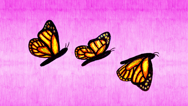 Butterfly Animation Sheet