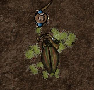 Bugs Splat
