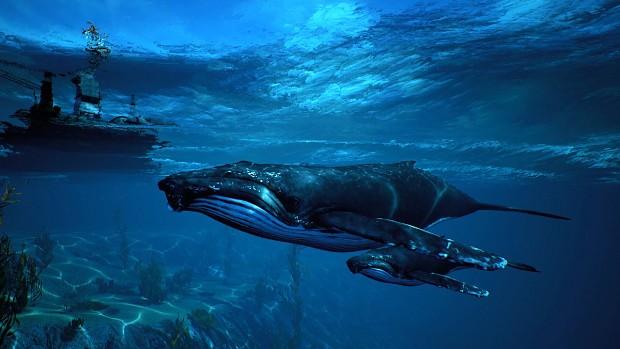 Humpback Whale Pod