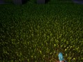 improved grass
