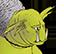 Grog icon 6
