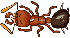 fireant 4