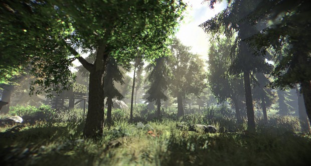 PAZE Environment - Northern Forest