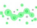 fungi.game