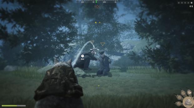 Enemies of the Raccoon