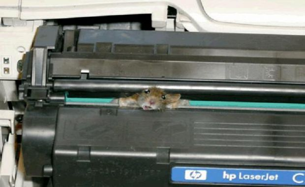 What do you mean printers don't have a mouse ?