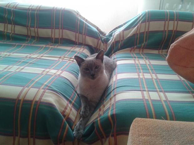 My based cat