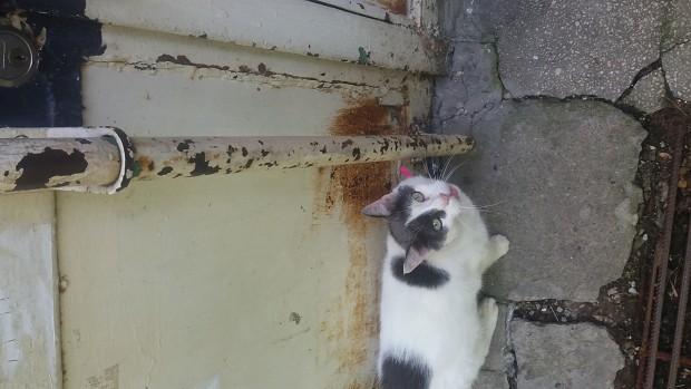 Ma Cat