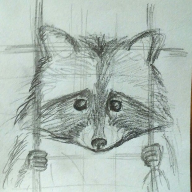 The first drawings of Still Prisoned Raccoon