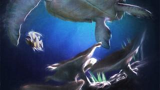 Reef Migration