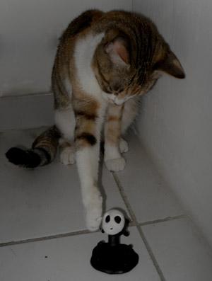 cat_eco1