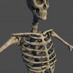 skeleton_details