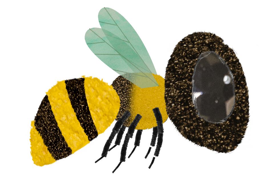 Buzz Whizz: Bees - American Bumblebee