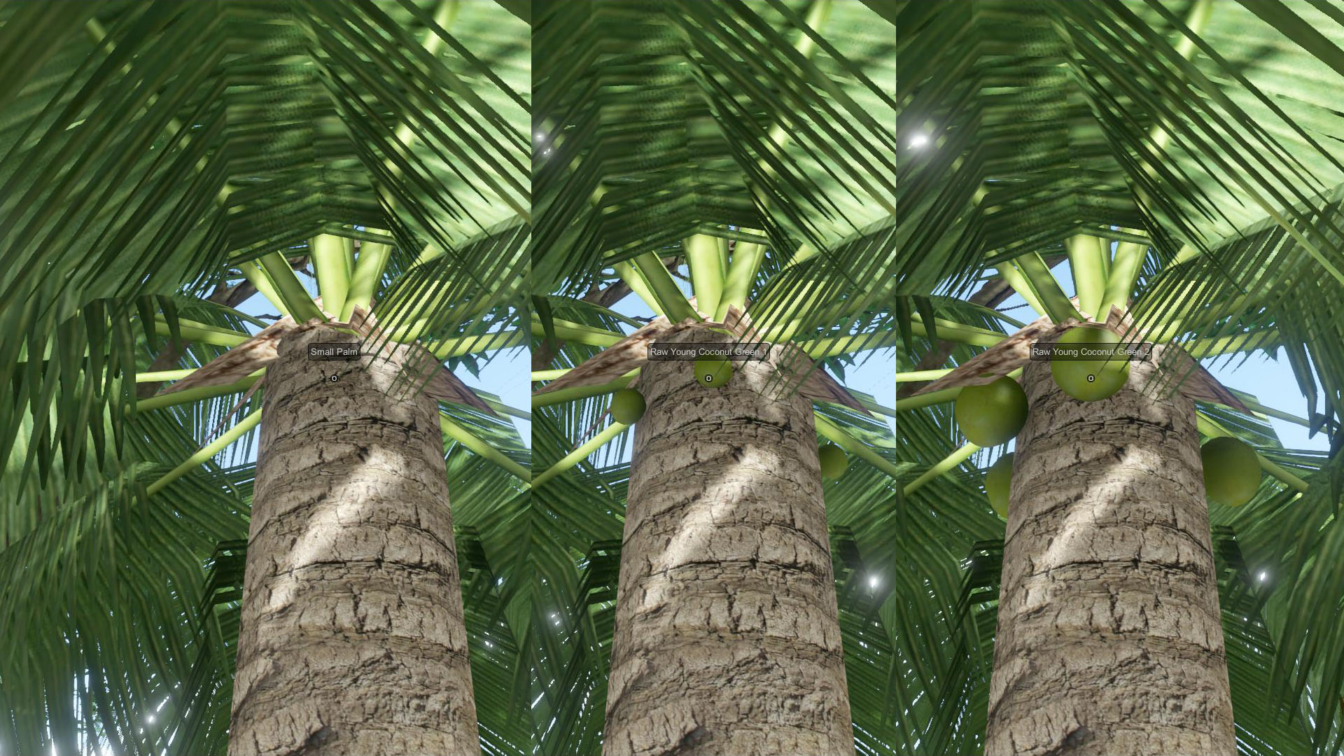 EtP-Ripe-Coconut1