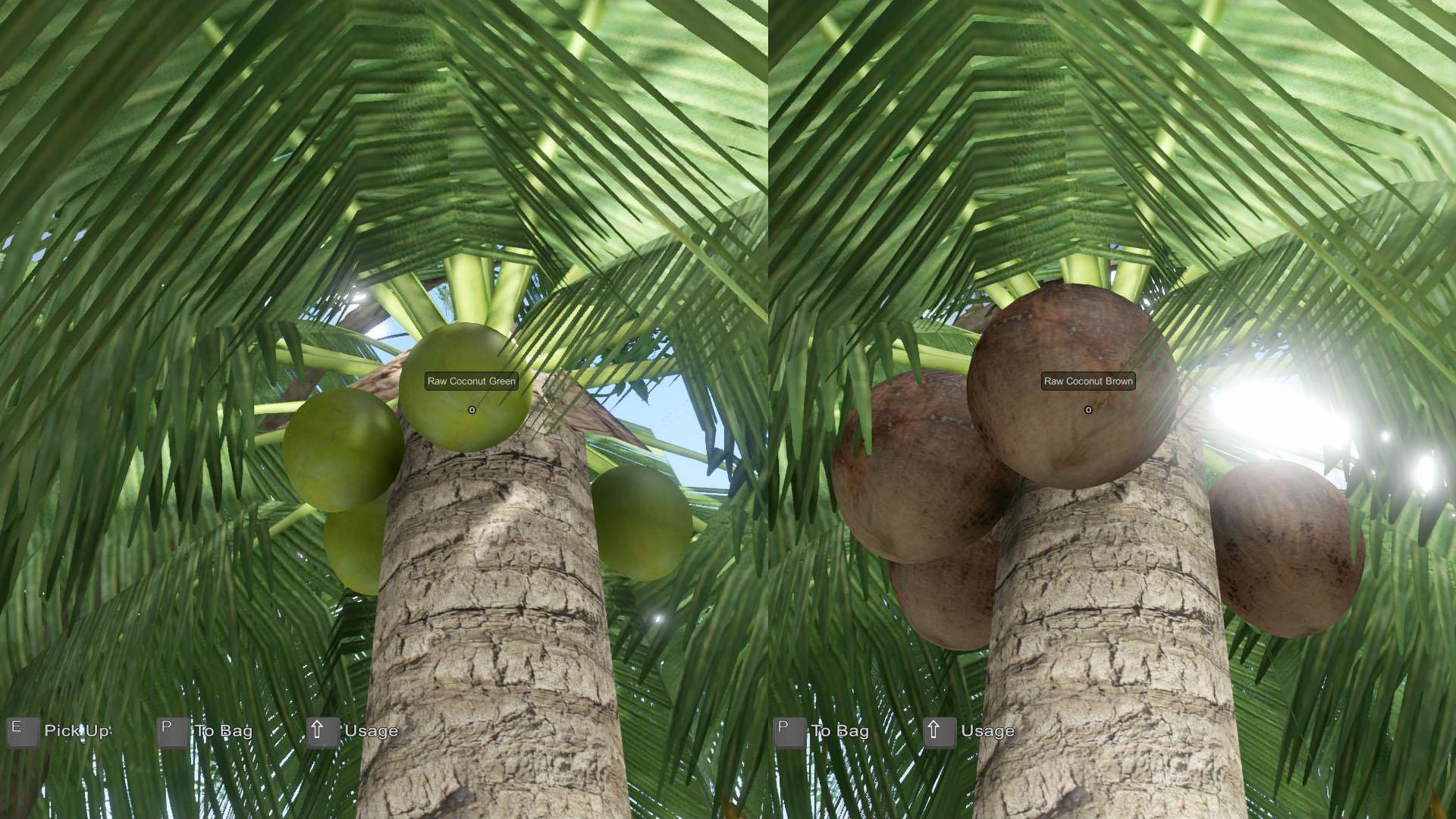 EtP-Ripe-Coconut2
