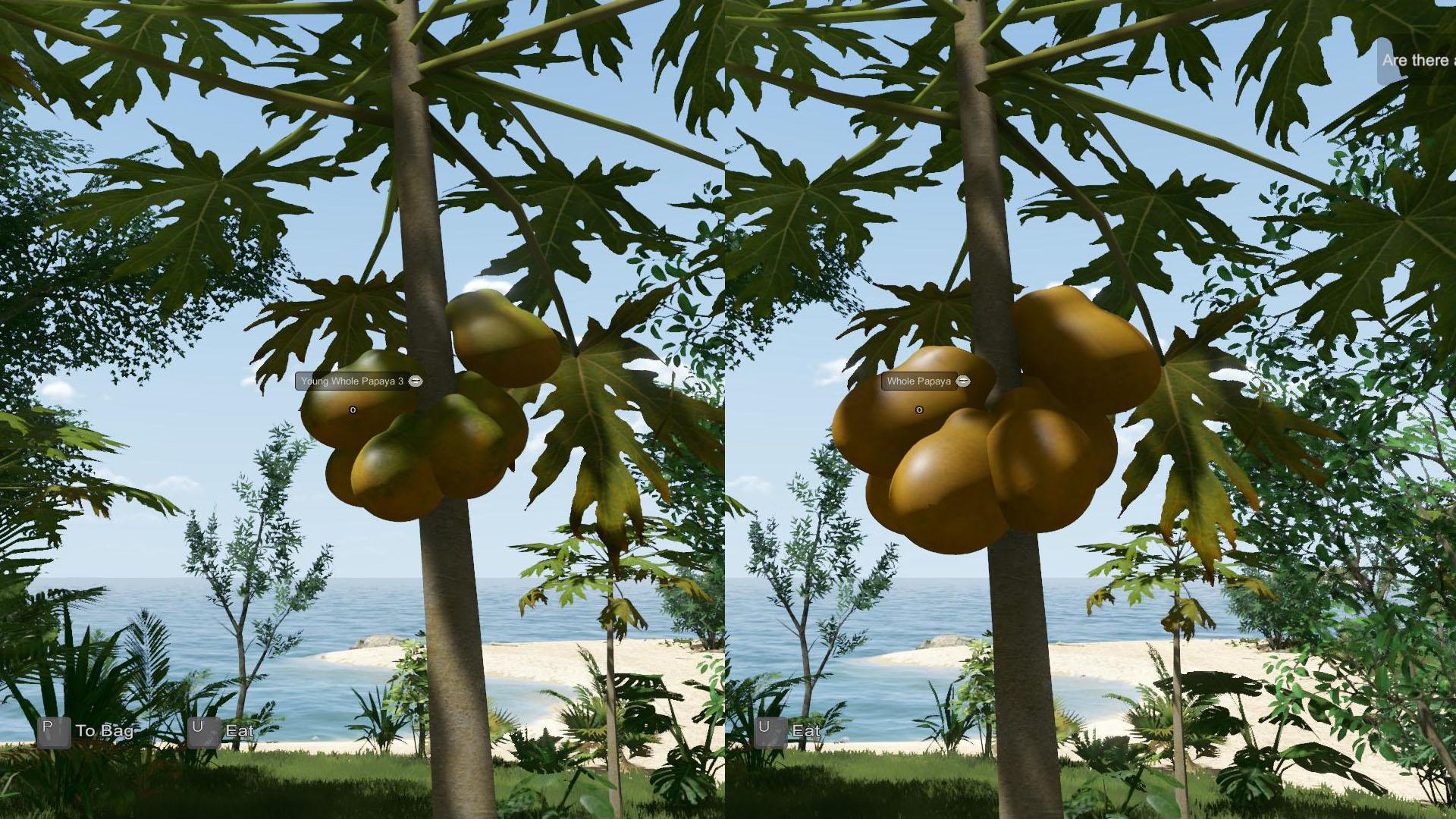 EtP-Ripe-Papaya2