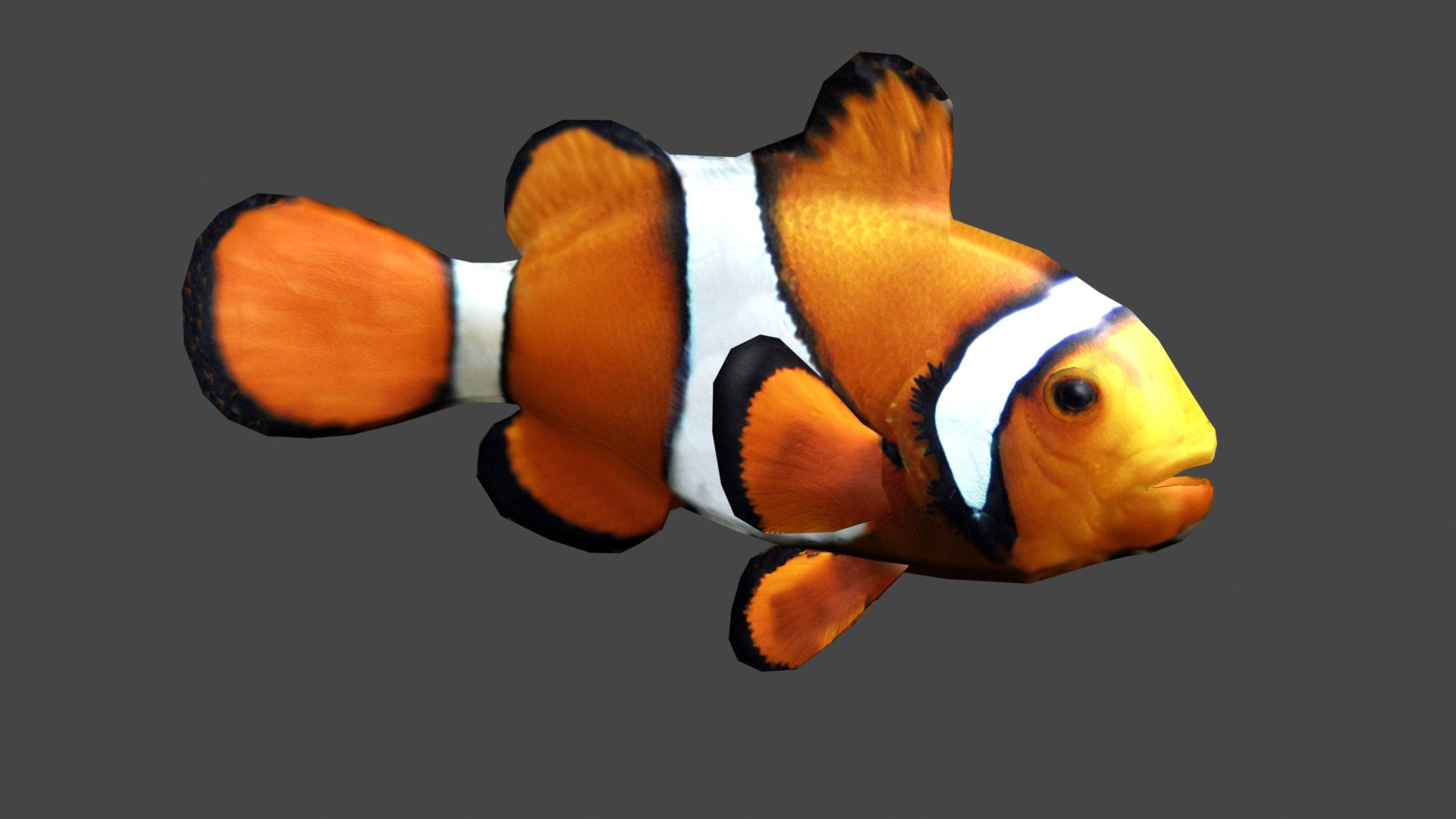 Clownfish image jaws of evolution indie db for Clown fish for sale