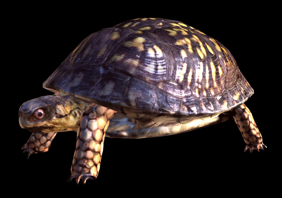 box turtle image reggae speed indie db