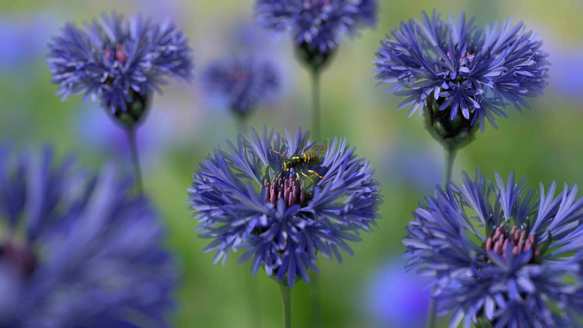 Wasp on Cornflower image Lariad In DB