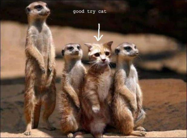Camouflage didnt work. \u003d( \u003dD \u003dP XD image , Cat lovers , Indie DB