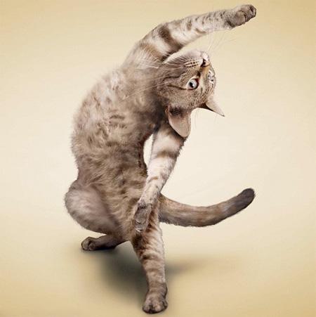 Bildergebnis für Dancing cat