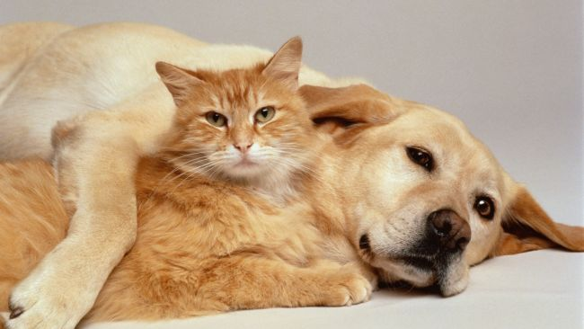 cat lovers meet dogs and cats