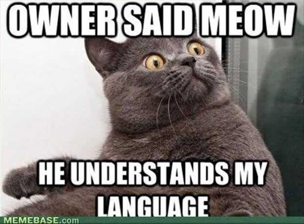 Funny Cat Memes: Funny Cats Image