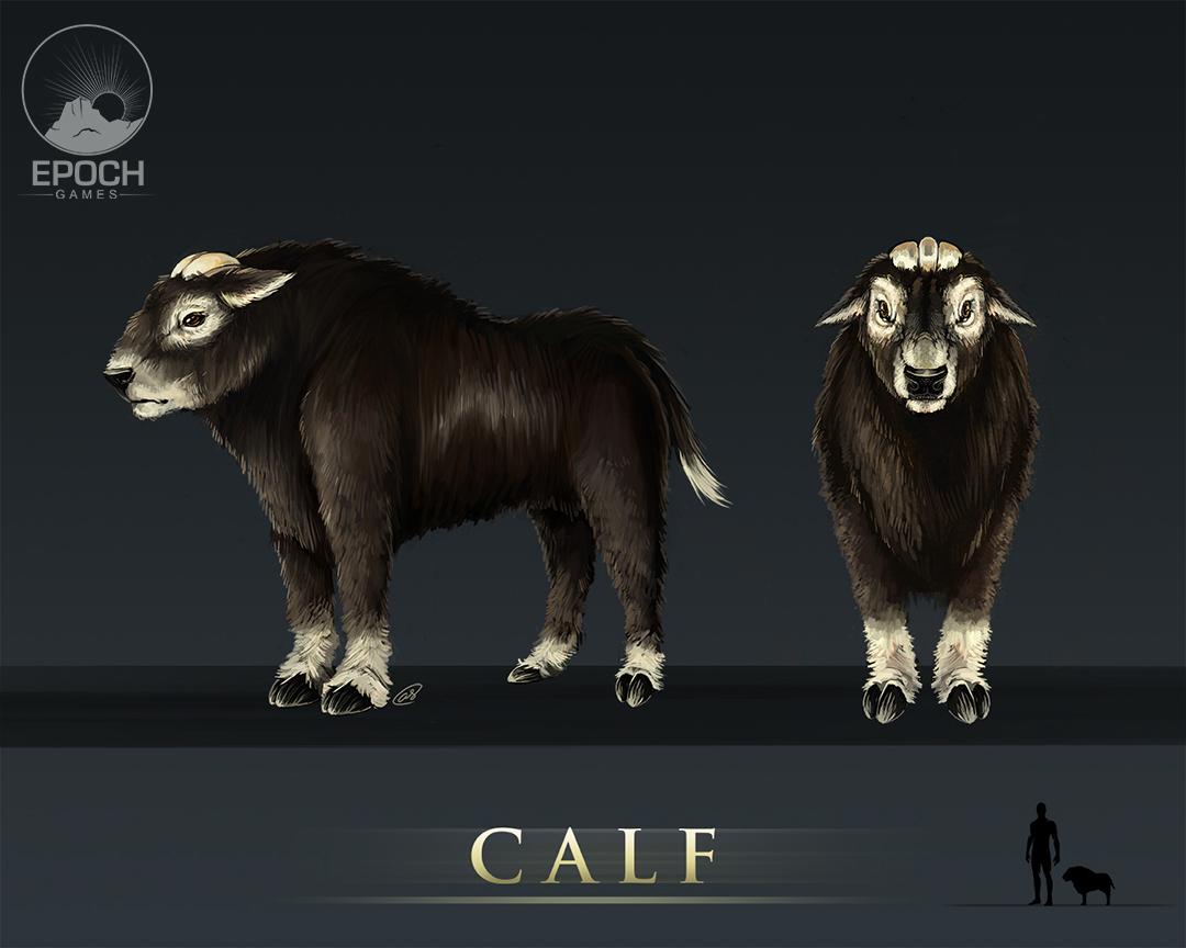 Northern Calf by Amanda Starlein